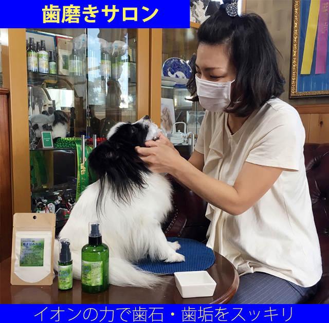 犬の歯石を取り除く【ペット・マイスター】は愛犬の口の悩みを一緒に解決します