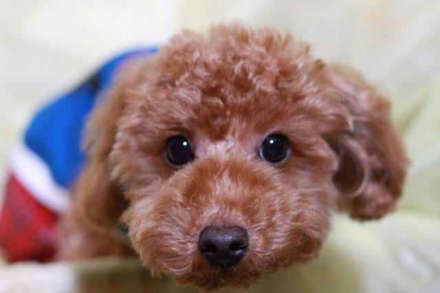 犬の歯磨き・歯石除去は【ペット・マイスター】へ!愛犬のお口の汚れは毎日チェックしよう